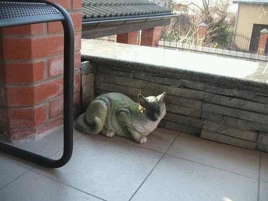 Koshkin Dom : кошки