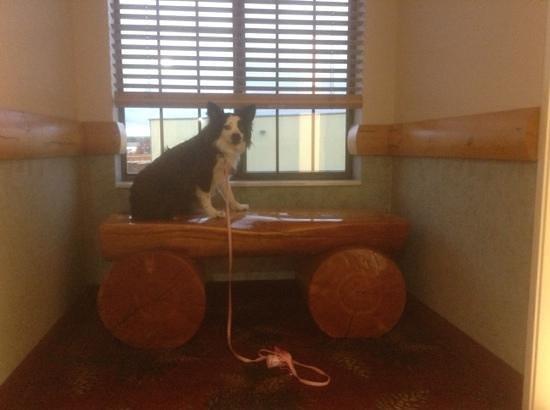 Best Western Yellowstone Crossing: Nice, pet friendly hotel.  Posey loves it!