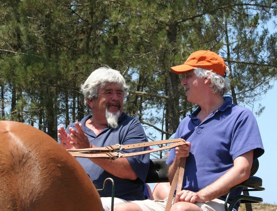 New Forest Lodge Horse Drawn Carriage Tours: Take the reins with an experienced instructor/guide