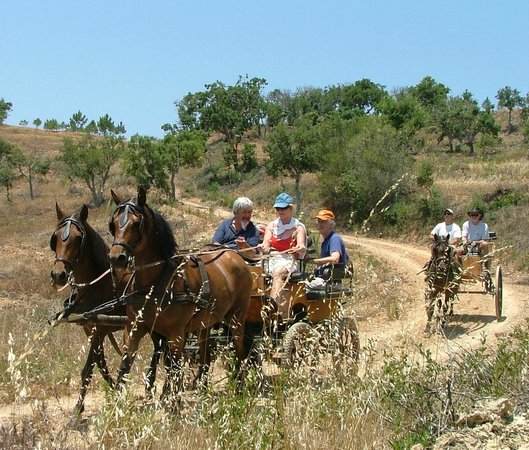 New Forest Lodge Horse Drawn Carriage Tours: Explore woodland trails