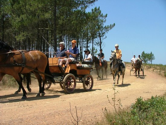 New Forest Lodge Horse Drawn Carriage Tours: Ride or drive, the whole family can be included