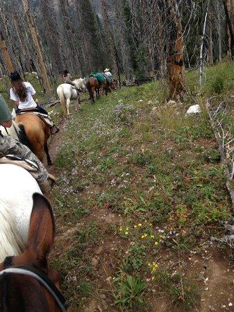 A-OK Corral / Horse Creek Ranch: Trail ride