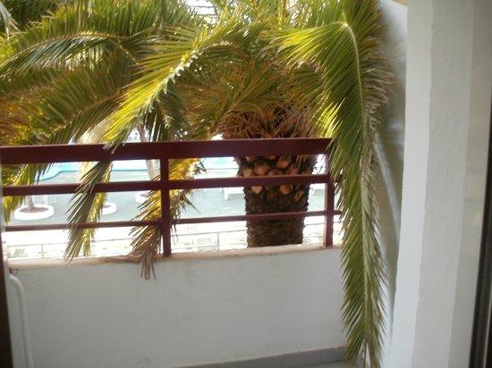 Hotel Apartamentos Sol Bay: nice tree