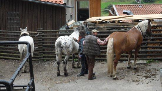 Tigerhill Ranch B&B: Putzen der Pferde :)