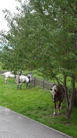 Tigerhill Ranch B&B: Mittagspause für Pferd und Reiter