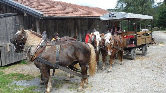 Tigerhill Ranch B&B: Ausflug mit dem 4-Spänner