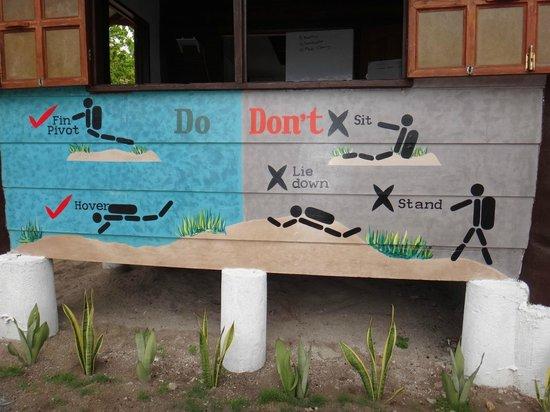 Divelink Cebu: DiveShop