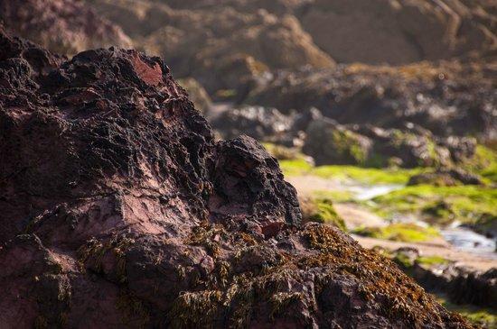 Coldingham Sands: Coldingham Bay