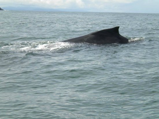 Dolphin Day Tours Costa Rica