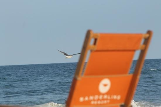 Sanderling Resort: relaxing...beach is so pristine and quiet.