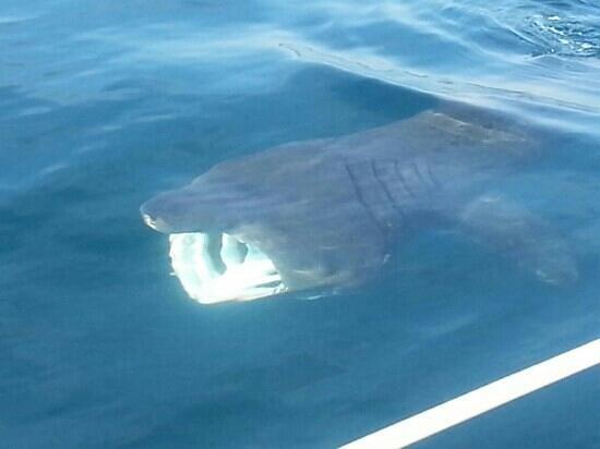 Marine Discovery: Amazing encounter