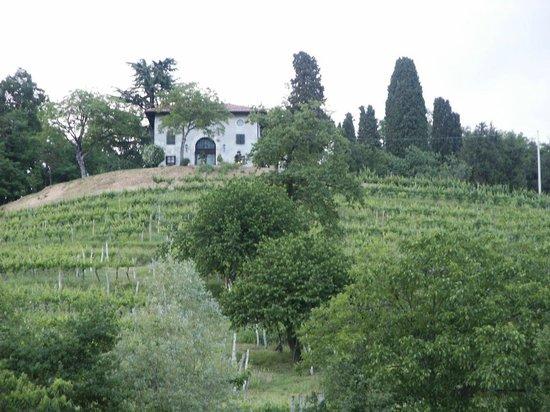 Agriturismo Giorgio Colutta: die Weingärten hinter dem Weingut