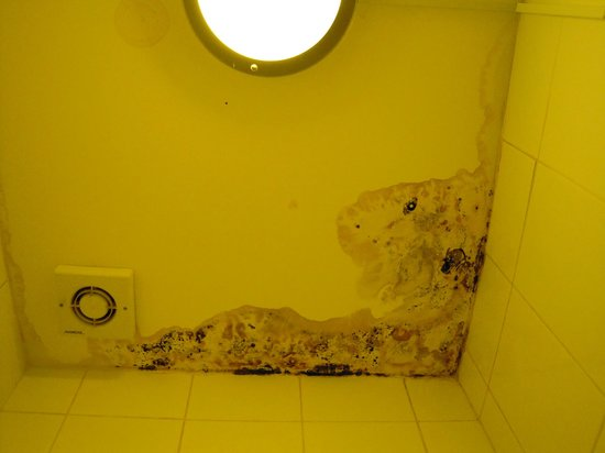 The Londonears Hostel: soffitto bagno