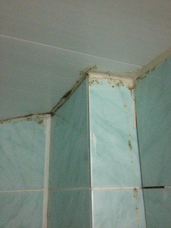 Carmina Hotel: mould in shower