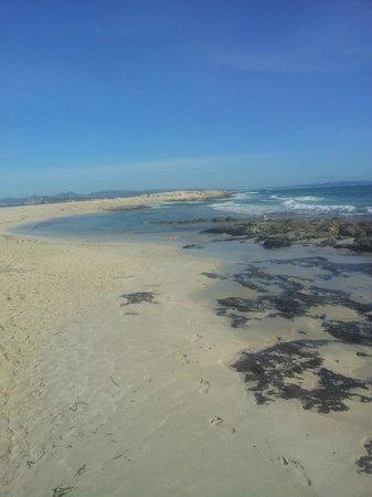 Apartamentos Pinos Playa: ses illites