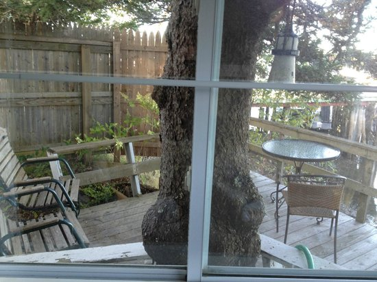 Pier One Vacation Rentals: View of the pine tree and deck from the Deck House window