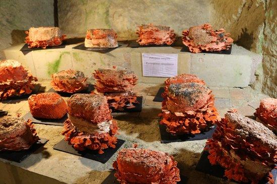Musée du Champignon : Shrooms.