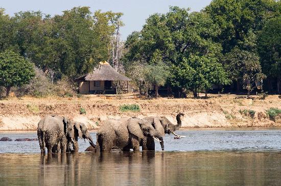 Nsefu Camp : Elephants outside Nsefu
