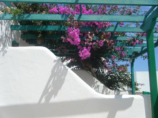 Celeste Apartments: Bougenvilia across adjoining patio.