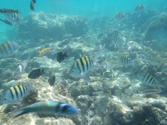 Aruba Sunset Beach Studios: más peces