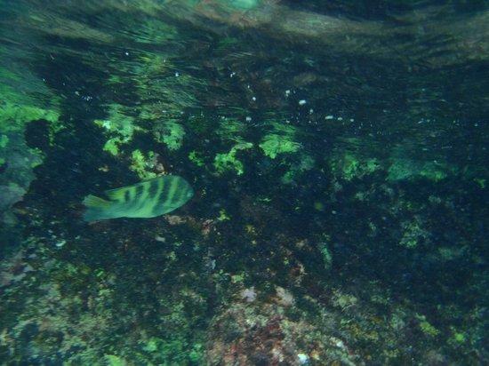 Aruba Sunset Beach Studios: corales y peces