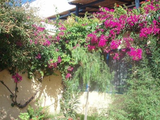 Andros Holiday Hotel : Blumenschmuck im Hotel