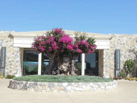 Barcelo Hydra Beach Resort : Entrée de l'Hôtel Barcelo