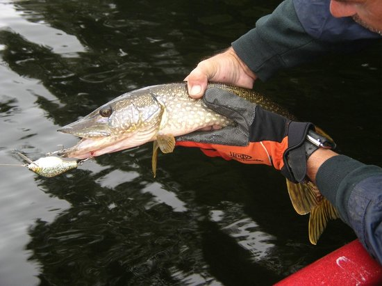 Motel Long Lake and Cottages: northern pike