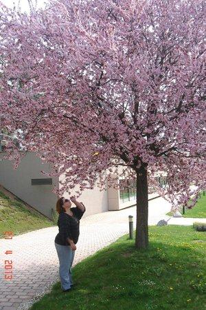 Das Sonnreich Thermenhotel Loipersdorf : апрель, все вокруг отеля цветет