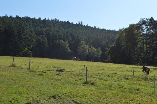 Fehrenbacherhof: the back yard