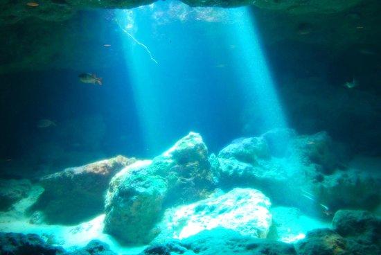 aquarium - Picture of Okinawa Churaumi Aquarium, Motobu-cho - TripAdvisor