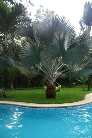 Playa Negra Guesthouse: The Pool