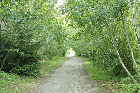 Yakutania Point: The trail to Yakutania