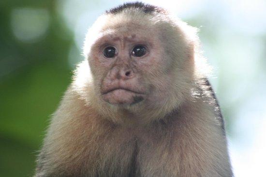 Villas Mymosa : A local monkey