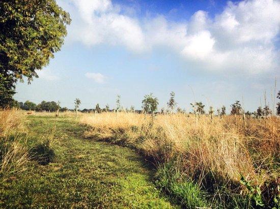 The Farm Camp views