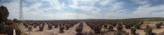 Hacienda La Vereda: Los alrededores