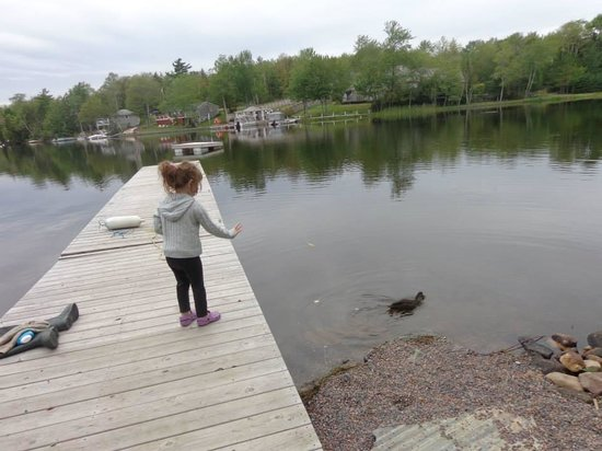 Cambra Sands: Grandaughter Becky feeding hte Ducks.