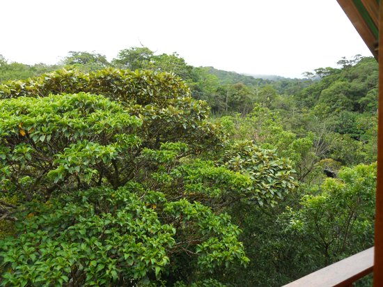 TreeTop House: View from tree top apartment