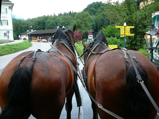 Hotel Mueller : Horse Carriage ride to castle right in front of hotel