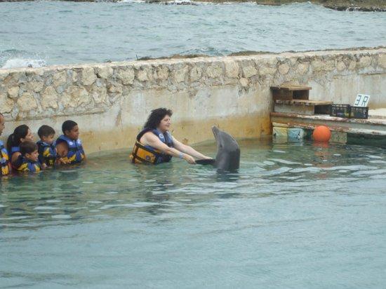Dolphin Discovery Costa Maya: Sweet baby dolphin!!