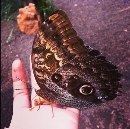 Mariposas de Mindo - Butterfly Garden : las mariposas se paran en tus manos si les das comida