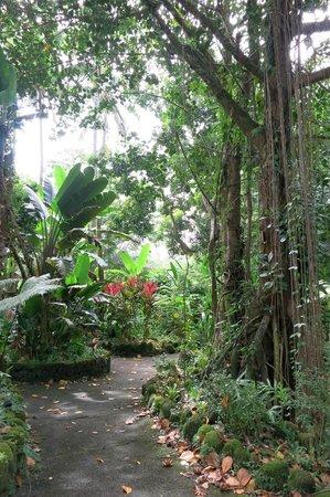Hilo Tropical Gardens : Garten, Anlage