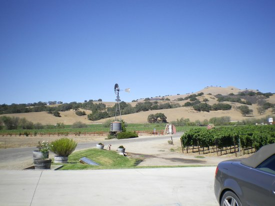 Santa Ynez Valley: Vines and oaks