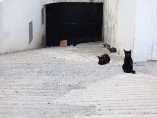 Arena Dorada Apartments : La team de chat errants du voisinage (bloc A/B, méfiez-vous)