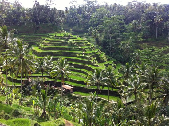Tarasy ry owe w tegalalang picture of tegalalang rice for Tegalalang rice terrace ubud