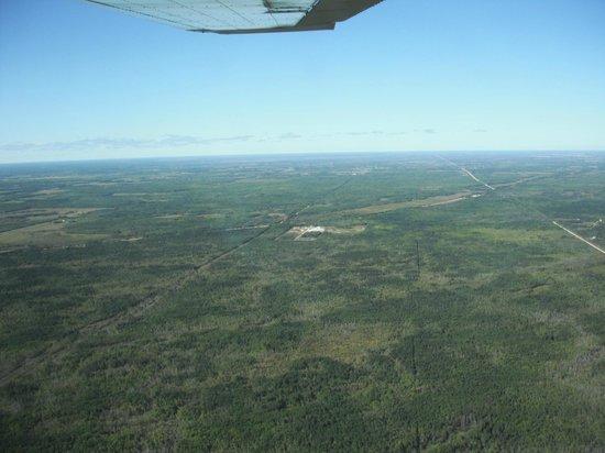 Interlake Aviation: Forest north of Gimli