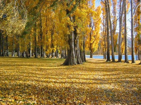 Lake Wanaka Homestay: Autumn Colours