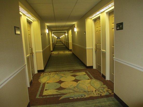 Hampton Inn & Suites Providence-Warwick-Airport : Long Hallways