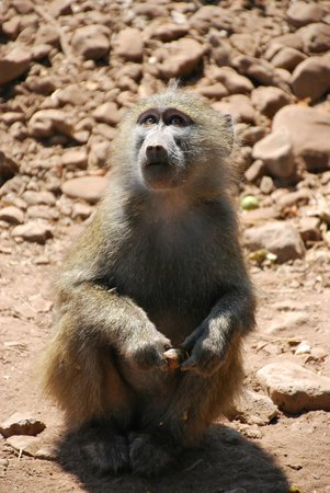 Warrior Trails Day Tour: Baboon