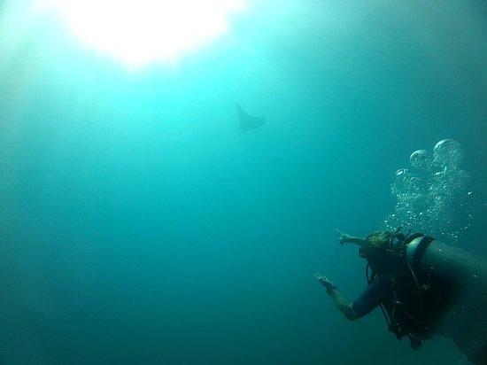 Aqua Activities Los Cabos: Cabo - Manta Ray